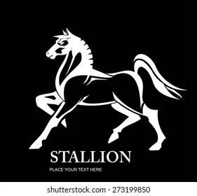 Standing Horse. full body side view of a big horse. bold white horse Isolated on Black background.