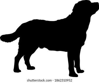 Standing Labrador Retriever Dog Silhouette
