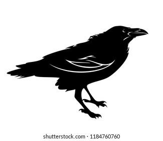 standing raven bird black vector outline