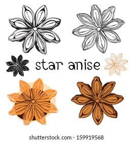 Star anise. Isolated on a white background .