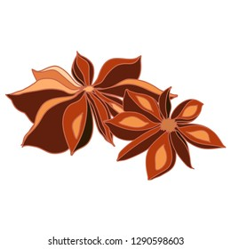 star anise spice vector isolaed