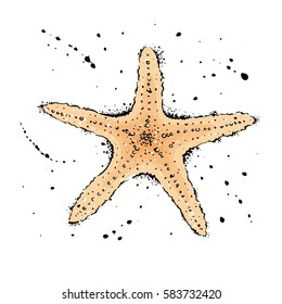 starfish.  Hand drawn vector illustration in watercolor style.