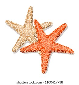 Starfish isolated on white background. Vector illustration.