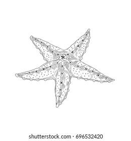 Starfish. Sea creatures. Vector sketch. Drawn by hand.