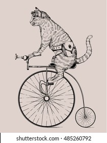 steam-punk cat on retro bicycle with bag and glasses, cat in etching, isolated, fantasy, print, etch, vector cat, graphic, poster, vintage