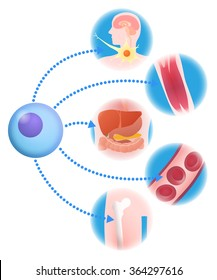 stem cell (iPS cell, ES cell) and regenerative medicine, vector illustration