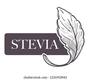 Stevia natural sweetener, leaf put in drink cup vector. Monochrome sketch outline with sweet substitute of sugar, tea beverage. Plant used to naturally increase sweetness of liquid poured in mug