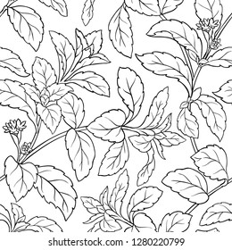 stevia seamless pattern on white background