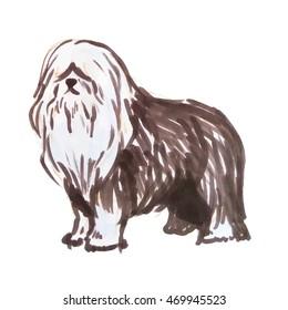 Stock illustration of old English Shepherd dog breed, bobtail dog isolated on white background. Vector illustration in hand drawn style