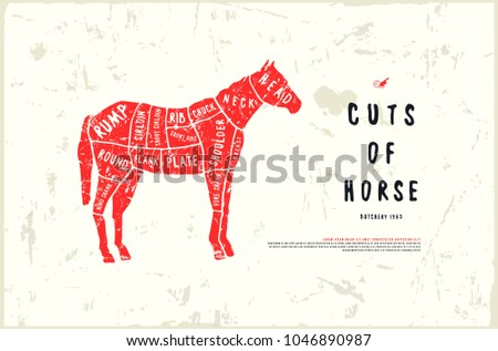 stock vector horse cuts diagram in the style of handmade graphics   illustration with rough texture