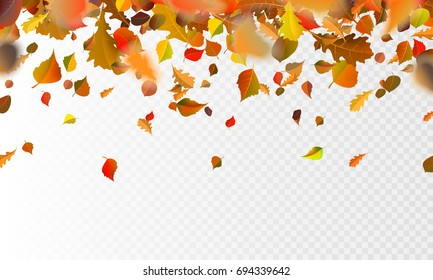 Stock vector illustration autumn falling leaves on transparent checkered background. Autumnal foliage fall and poplar leaf flying in wind motion blur. Orange design for autumn design. EPS10