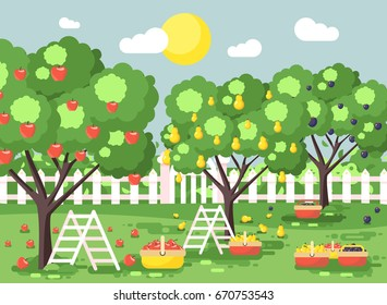 Stock vector illustration cartoon harvesting ripe fruit autumn orchard garden with stepladders plums, pears, apples trees, put crop in full baskets, green landscape scene outdoor background flat style