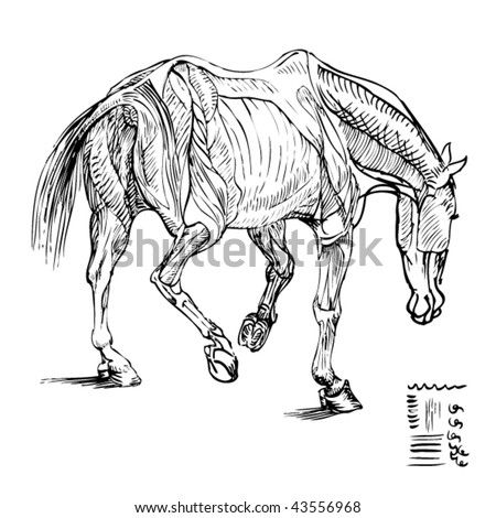 Stock Vector Illustration Ink Drawing Study Stock Vector (Royalty ...