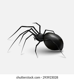 Stock vector illustration realistic black spider. light gray background. EPS 10