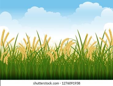 stock vector illustration of rice field, paddy, rural summer landscape graphic illustration
