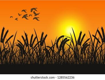 stock vector silhouette flying herd ducks and grassland graphic illustration