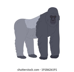 Stocky ape or gorilla standing on four legs and leaning on forelimbs. African black and gray animal with bare feet and face. Flat colorful vector illustration isolated on white background