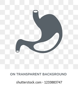 Stomach with Liquids icon. Trendy flat vector Stomach with Liquids icon on transparent background from Human Body Parts collection.