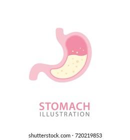 Stomach Organ Anatomy. Human Internal Organs Concept. Vector Illustration