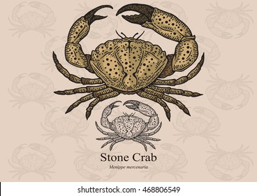 Stone crab. Vector illustration with refined details and optimized stroke that allows the image to be used in small sizes (in packaging design, decoration, educational graphics, etc.)