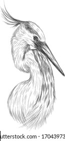 stork head bird black and white sketch coloring book vector illustration