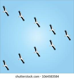 stork vector bird