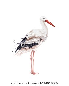 Stork Vector watercolor isolated on white. Icon Painted style illustration