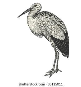 "stork - vintage engraved illustration - ""Cent récits d'histoire naturelle"" by C.Delon published in 1889 France"