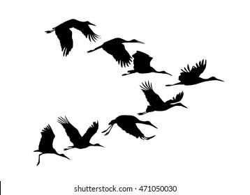 Storks flock. Vector silhouette
