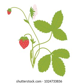 strawberries tree vector illustration