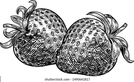 A strawberry food graphic. Original illustration in a vintage engraving woodcut etching style.