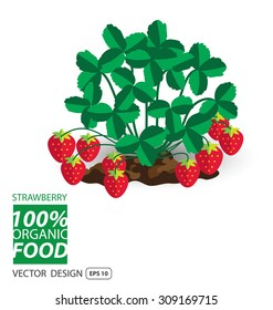 Strawberry, fruits vector illustration.