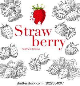 strawberry hand drawn illustration