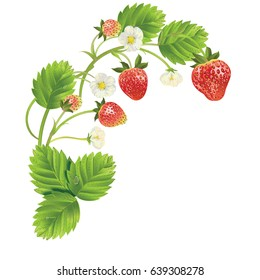 Strawberry with leave, water drops and flowers. Vector realistic illustration. On white background. Design for grocery, farmers market, tea, natural cosmetics, summer garden design element.