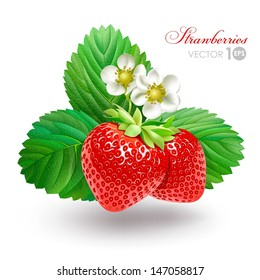 Strawberry with leaves and flowers. Vector Eps 10.