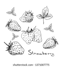 Strawberry set. Collection of isolated sketchy style strawberries. Doodle berries in black and white. Hand drawn vector illustration without background