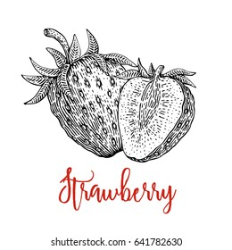 Strawberry vector drawing. Isolated Strawberry engraved