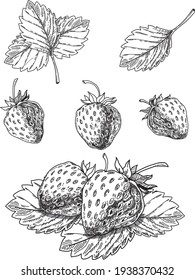Strawberry vector drawing set. Isolated hand drawn berry, slice and leaf on white background. Summer fruit engraved style illustration. Detailed vegetarian food. Great for label, poster, print