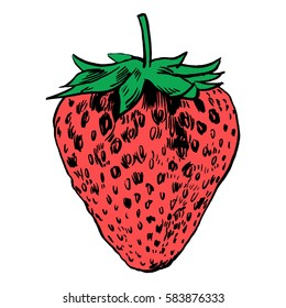 Strawberry vector illustration.