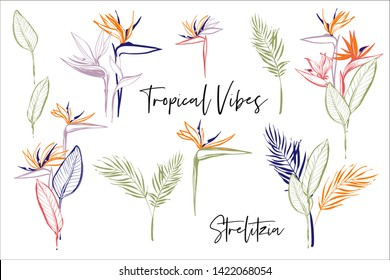 Strelitzia pink, green, orange, colorful line flowers, banana palm leaf. Tropic outline floral illustrations. Tropical collection. Sketch in watercolor style. Hand drawn line on white background
