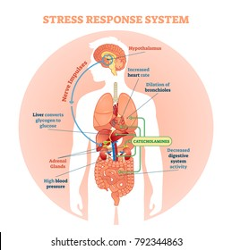 Stress response system vector illustration diagram, nerve impulses scheme. Educational medical information.