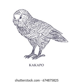 Strigops habroptila - Kakapo, owl parrot. Vector illustration, bird with conservation status.