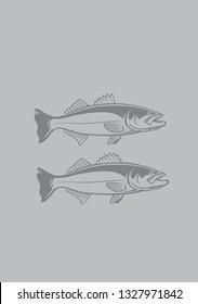striped bass image