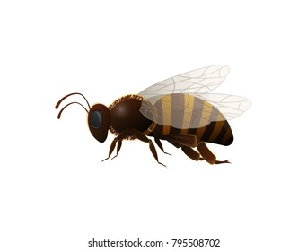 Striped honey bee side view isolated icon on white background. Insect symbol for natural, healthy and organic food production vector illustration in cartoon style