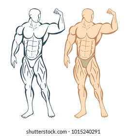 Strongman hand drawn illustrations set. Bodybuilder front view drawing. Isolated vector.