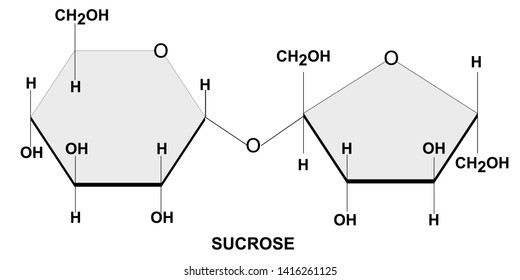 Structural chemical formula and model of sucrose