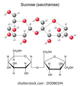 Structural chemical formula and model of sucrose - saccharose, 2d and 3D illustration, isolated  vector, eps 8