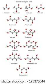Structural chemical formulas of basic bioorganic acids (acetic, pyruvic, lactic, succinic, fumaric, malic, tartaric, oxalic, oxaloacetic, ketoglutaric, citric, isocitric, aconitic), vector, isolated