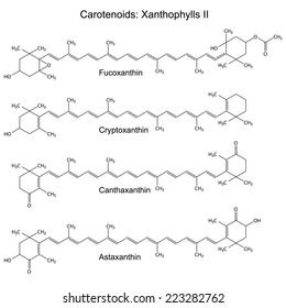 Structural chemical formulas of plant pigments - carotenoids xanthophylls - astaxanthin, canthaxanthin, cryptoxanthin, 2d illustration, vector, eps8