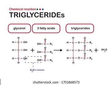 Structure and chemical reaction formation of triglyceride